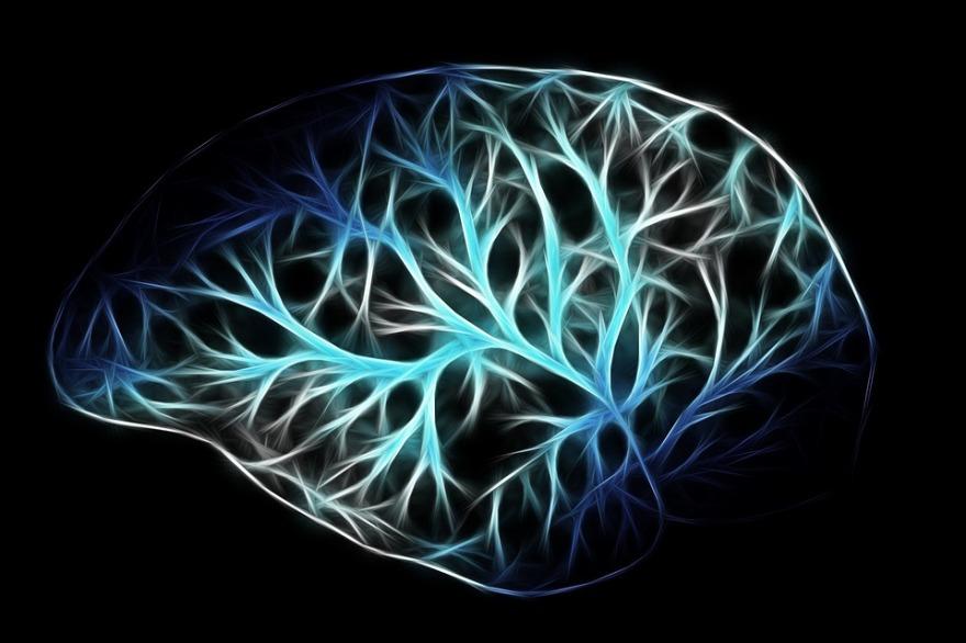 brain-2676370_960_720